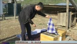 【脱贫攻坚在行动——第一书记代言】王忠良:我为西北村蜂蜜代言