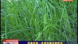 乡村四季12316|四季科普--韭菜的病虫害防治