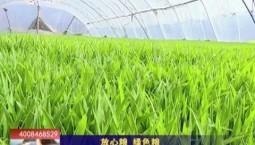 乡村四季12316|放心粮 绿色粮