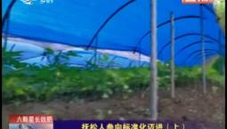 鄉村四季12316|撫松人參向標準化邁進(上)