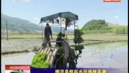 乡村四季12316|柳河县掀起水田插秧高潮