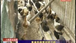 乡村四季12316|畜禽防病要对症下药