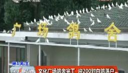 第1报道|文化广场鸽舍完工 迎200对白鸽落户