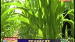 乡村四季12316|农把式的高产课堂