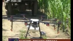 农业部门提醒:警惕粘虫发生 保障粮食安全