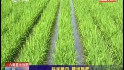 乡村四季12316|科学晒田 精细施肥