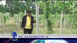 吉林报道|珲春:特色水果为脱贫开拓新天地_2019-07-23