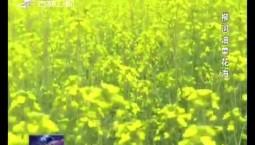 最美吉林 | 柳河油菜花海