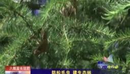 乡村四季12316 防松毛虫 建生态林