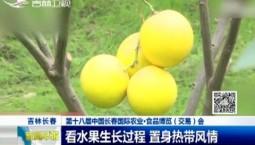 新闻早报|看水果生长过程 置身热带风情