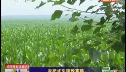 乡村四季12316|农把式引领致富路