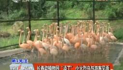 """第1报道丨长春动植物园""""添丁""""  小火烈鸟与游客见面"""
