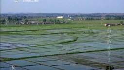 天地长白|稻米的故事 第二集 时遇
