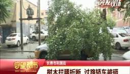 守望都市|树木拦腰折断 过路轿车被砸
