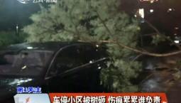 第1报道|车停小区被树砸 伤痕累累谁负责