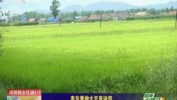乡村四季12316|李东青种大豆有诀窍