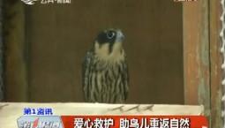 第1报道|爱心救护 助鸟儿重返自然
