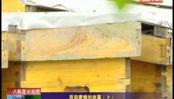 乡村四季12316|我和蜜蜂的故事(上)