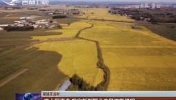 【奋进正当时】垄上写青春 吉林省新型职业农民不断涌现