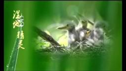吉林报道|专题片:《湿地精灵》(三)_2019-11-04