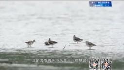 吉林報道|專題片:《濕地精靈》(二)_2019-11-03