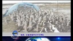 吉林报道 镇赉:珍禽养殖带动村民增收_2019-11-24