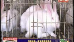 鄉村四季12316|四季科普——家兔喂養說道多