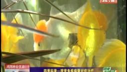 乡村四季12316|四季科普——观赏鱼疾病需对症治疗