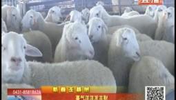乡村四季12316|喜气洋洋发羊财