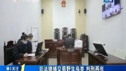 第1报道|非法猎捕交易野生鸟类 判刑两年