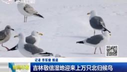 新闻早报|吉林敬信湿地迎来上万只北归候鸟