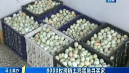 第1报道|双阳区8000枚滞销土鸡蛋急寻买家