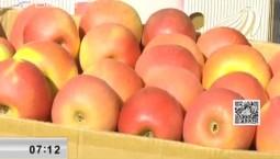 新闻早报|集安农户苹果滞销 各方上阵帮忙想招