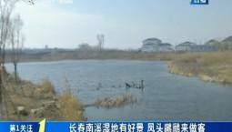 第1報道|長春南溪濕地有好景 鳳頭鸊鷉來做客