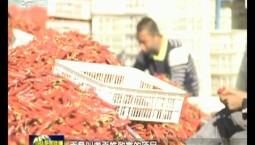 【决战决胜脱贫攻坚】白城洮北区:红辣椒串起红火日子