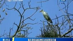 第1报道|磐石鹭鸶湖风景区迎来鹭鸶归巢