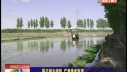 乡村四季12316|稻田综合种养 产量稳中有增