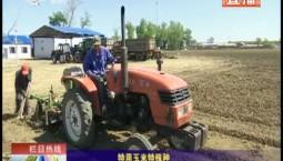 鄉村四季12316|特用玉米特殊種