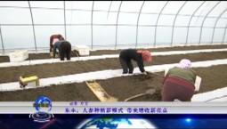 吉林報道|東豐:人參種植新模式 帶來增收新亮點_2020-06-09