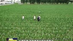 【在习近平新时代中国特色社会主义思想指引下——新时代 新作为 新篇章】吉林:以农业现代化引领乡村振兴