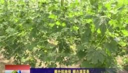 乡村四季12316|棚外稻秧绿 棚内蔬菜香