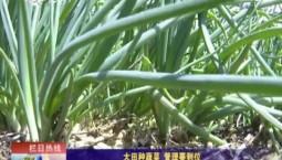 乡村四季12316|大田种蔬菜 管理要到位
