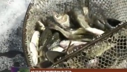 蛟河市开展增殖放流活动