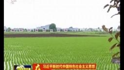 【在习近平新时代中国特色社会主义思想指引下——新时代 新作为 新篇章】做好粮食安全压舱石 争当现代农业排头兵
