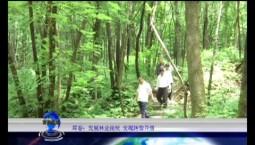 吉林报道|珲春:发展林业接续 实现转型升级_2020-07-28