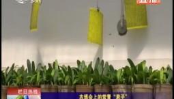 """鄉村四季12316 農博會上的常青""""君子"""""""