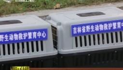 吉林省野生动物救护繁育中心放飞9只猛禽