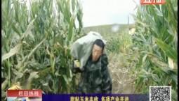 乡村四季12316|甜粘玉米丰收 多项产业并进