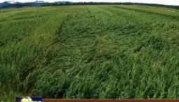 各地農業部門積極行動 因地制宜開展災后自救