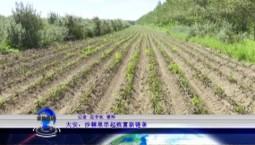 吉林报道|大安:沙棘果串起致富新链条_2020-09-19